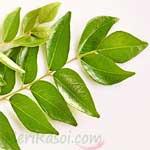 Curry-Leaf-कड़ी-पत्ता-करी-पत्ता-कमरकस-kadi-patta-kari-patta-kamarkas-Spices-Names-in-English-Hindi-Meri-Rasoi