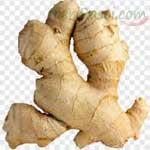 Ginger-(Fresh)-अदरक-Adrak-Spices-Names-in-English-Hindi-Meri-Rasoi